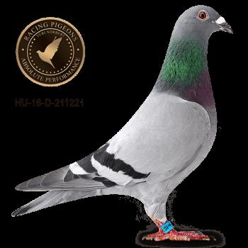 BIRDY 221