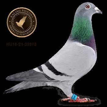 BIRDY 78