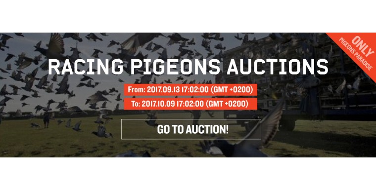 Top 10 Racing pigeons auction